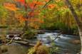 2008.10.25 奥入瀬渓流の紅葉