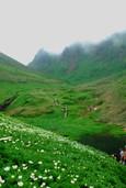 チングルマの群生と駒ケ岳