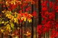 2008.10.25 蔦沼紅葉百景