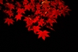 中央公民館 夜の紅葉