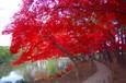 2008.11.08 盛岡中央公民館紅葉