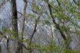 新緑と岩手山