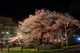 石割桜ライトアップ Ⅰ