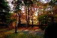 朝陽の木漏れ日を浴びて