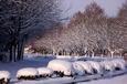 栃の木に咲いた雪の花