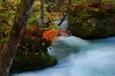奥入瀬渓流の紅葉 Ⅲ