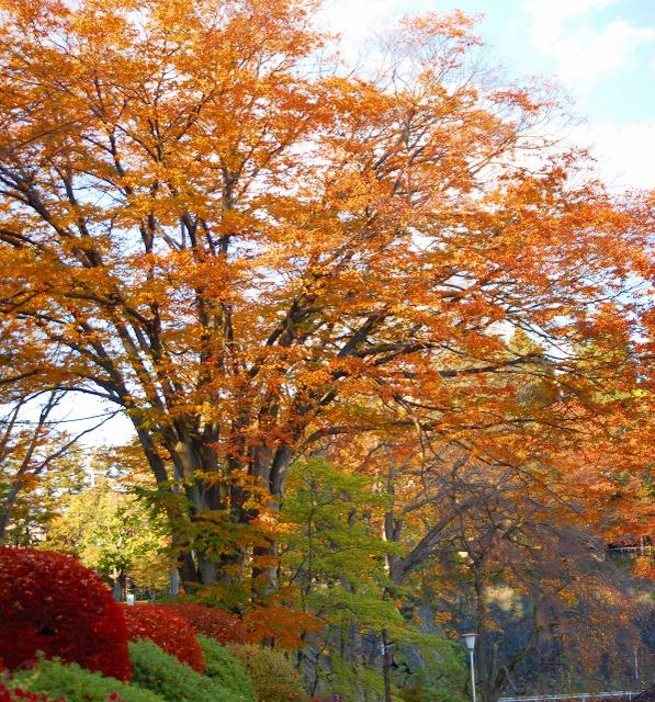 2008.11.1 盛岡城址公園