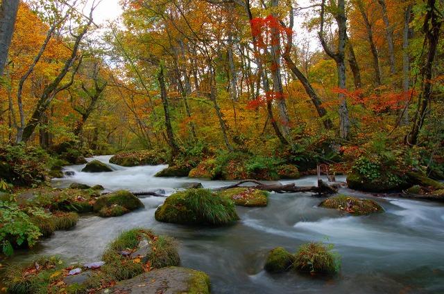 奥入瀬渓流の紅葉 Ⅱ