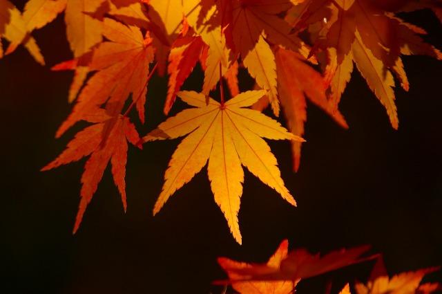 公園にて 光さす紅葉一枚