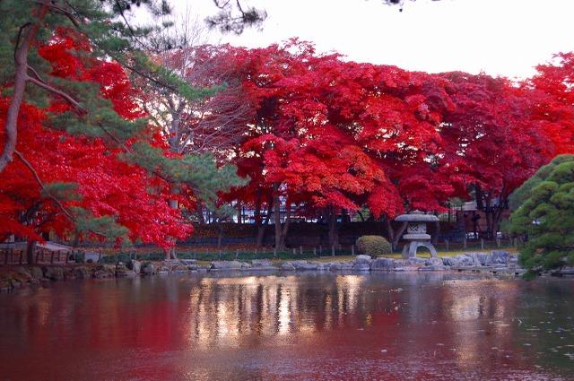 中央公民館 池と紅葉