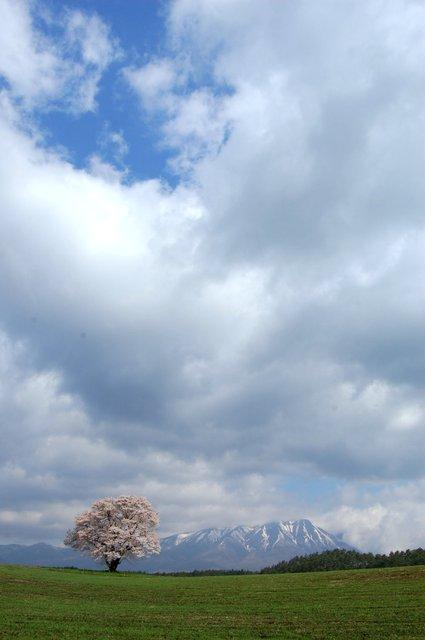 桜と山と雲と