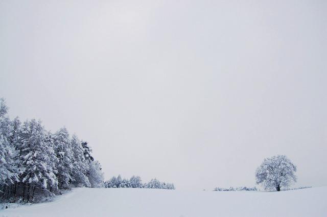 一本桜冬景色 Ⅲ