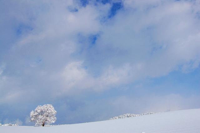 これも雪桜