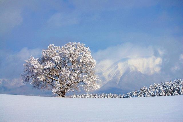 雪桜と岩手山