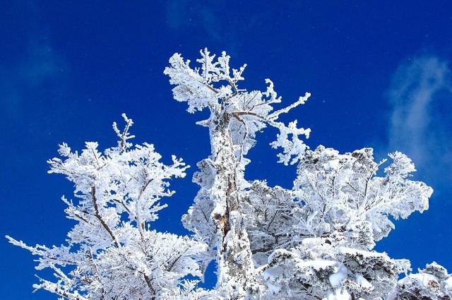 安比スキー場 西森山頂にて