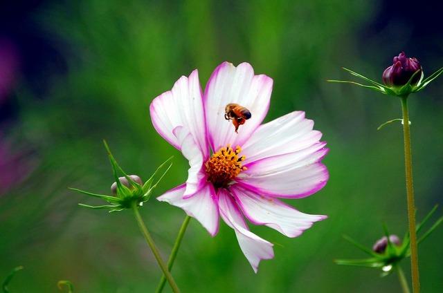 遺伝子とミツバチ