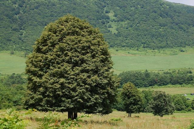 この~木、何の木?