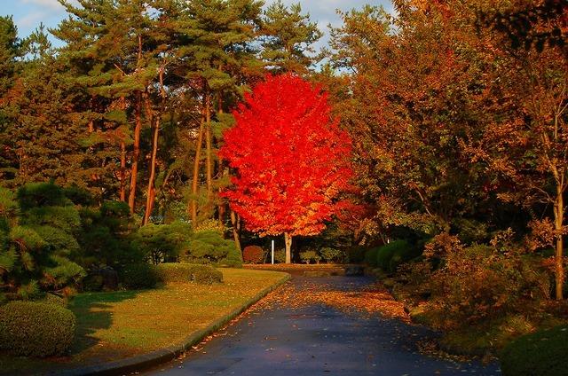 図書館裏の紅葉