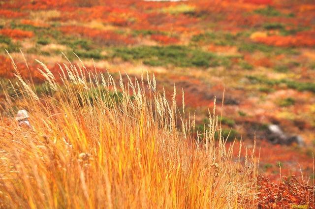 三石山の紅葉