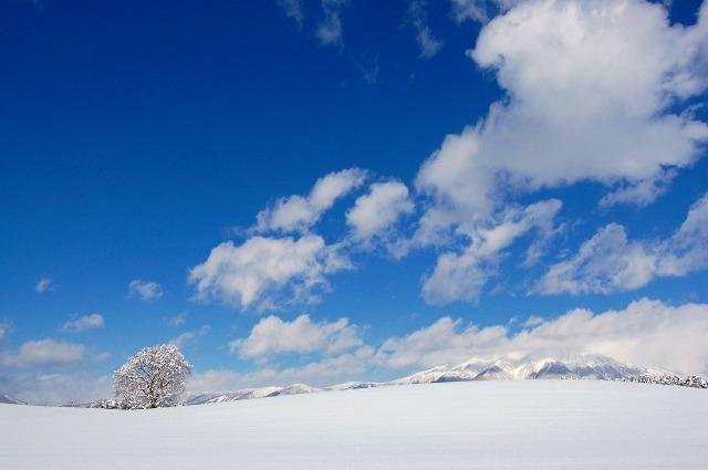 2009年1月21日 一本桜冬景色